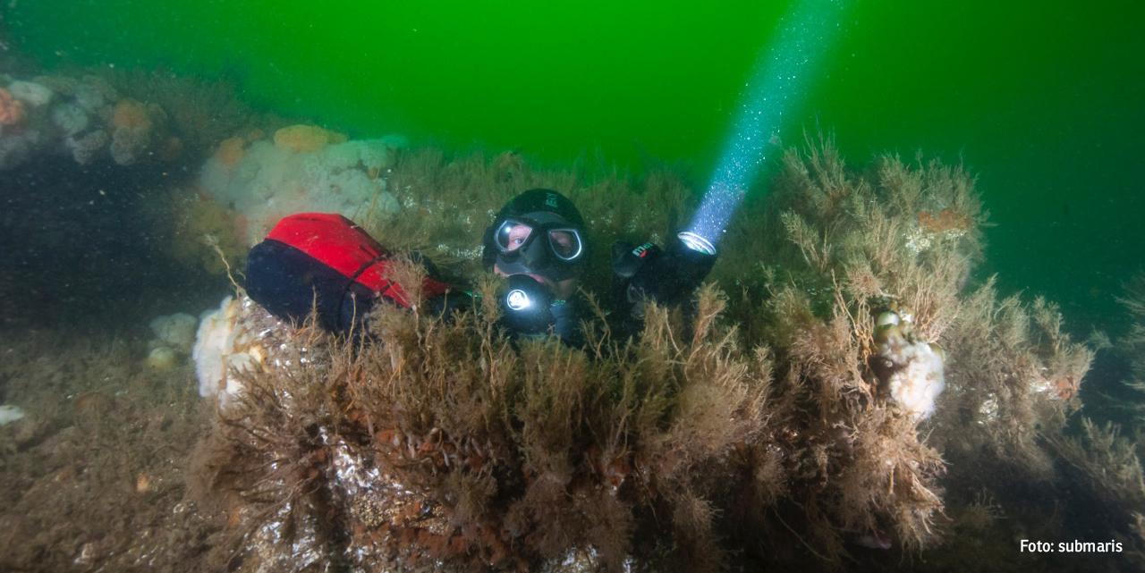 Taucher (Foto: Submaris)
